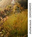 Beautiful Spider Web Sparkling...