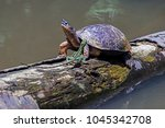 A River Turtle Met A Running...