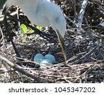 great white egret checking on...   Shutterstock . vector #1045347202