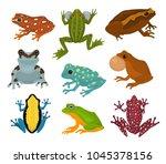 frog vector froggy character... | Shutterstock .eps vector #1045378156
