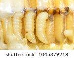 Larva honey bee in bee hive.
