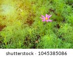 some focus and close up blurry... | Shutterstock . vector #1045385086