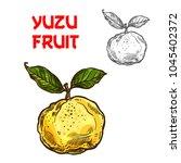 yuzu citrus fruit sketch icon.... | Shutterstock .eps vector #1045402372