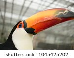 very big and colorful beak | Shutterstock . vector #1045425202