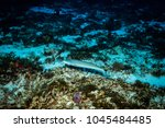 fish on the coral reef near...   Shutterstock . vector #1045484485
