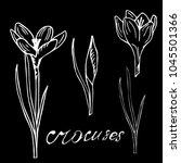 botanica crocus white on a... | Shutterstock .eps vector #1045501366