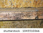 mold on construction wooden... | Shutterstock . vector #1045510366