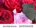 red and pink roses in wedding ... | Shutterstock . vector #1045536328
