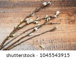 fluffy willow branches on a... | Shutterstock . vector #1045543915