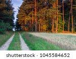 sandy rural road near forest in ... | Shutterstock . vector #1045584652