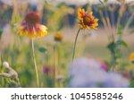 beautiful american cone flowers ... | Shutterstock . vector #1045585246