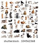 Stock photo group of cats and kitten on a white background 104562368