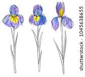 vector drawing flowers of iris  ... | Shutterstock .eps vector #1045638655