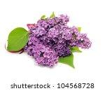 Purple Lilac Flowers  Syringa...