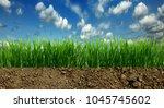 growing grass in the earth soil | Shutterstock . vector #1045745602