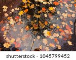 Colorful Autumn Leaves In A...
