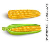 corn cobs on white background.... | Shutterstock .eps vector #1045806646