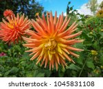 beautiful flower blooming  | Shutterstock . vector #1045831108