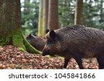 the wild boar  sus scrofa  ... | Shutterstock . vector #1045841866