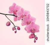 Branch Of Orchid Flowers On...
