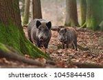 group of wild boars  sus scrofa ... | Shutterstock . vector #1045844458