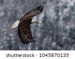american bald eagle in flight...   Shutterstock . vector #1045870135