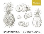 set of naturalistic drawings of ... | Shutterstock .eps vector #1045946548