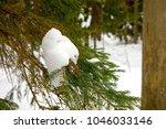 winter landscape with pine... | Shutterstock . vector #1046033146