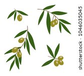 green olives branches with... | Shutterstock .eps vector #1046035045
