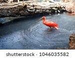 group of pink flamingos ... | Shutterstock . vector #1046035582