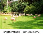 group of pink flamingos ... | Shutterstock . vector #1046036392