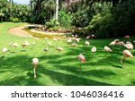 group of pink flamingos ... | Shutterstock . vector #1046036416