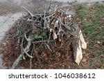 stacked yard debris  sticks ... | Shutterstock . vector #1046038612