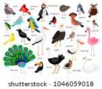 vector birds. european and...   Shutterstock .eps vector #1046059018