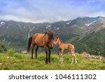 horses grazing in the mountain... | Shutterstock . vector #1046111302