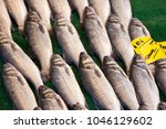 fish for sale in a fish market  ...   Shutterstock . vector #1046129602