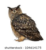 Stock photo eurasian eagle owl bubo bubo years old standing against white background 104614175