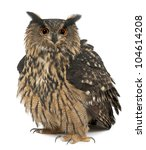 Stock photo eurasian eagle owl bubo bubo years old standing against white background 104614208