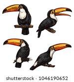 exotic bird toucan. hand drawn... | Shutterstock .eps vector #1046190652