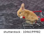 Stock photo close up little brown white rabbit sitting on shopping cart on velvet fabric gray background 1046199982