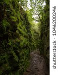 Small photo of Looking down deep lush green chasm of Lud's Church