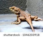 brown lizard or reptile... | Shutterstock . vector #1046203918