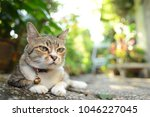 tabby cat with bell collar laying down under the three