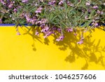 dainty mauve blooms of... | Shutterstock . vector #1046257606
