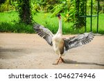 white and gray goose spreading... | Shutterstock . vector #1046274946