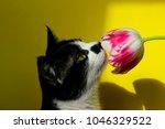 cat sniffing pink flower ... | Shutterstock . vector #1046329522