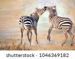 zebra. wild animals on the... | Shutterstock . vector #1046369182