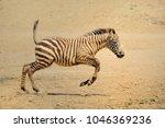 Zebra Wild Animals African Grasslands - Fine Art prints