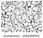 fresh fruit  illustration of... | Shutterstock .eps vector #1046398552