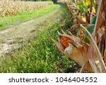 golden corn cob with its leaves ... | Shutterstock . vector #1046404552